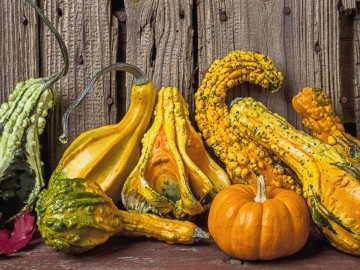 Remarkable Gourds